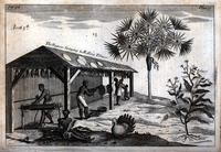 The Negroes stringing and rolling tobacco. [graphic].
