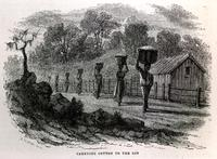 Carrying cotton to the gin [graphic] / J.W. Orr N.Y.