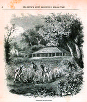 Tobacco plantation [graphic].