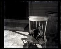 [Dog Jet on chair, probably Sea Girt, NJ] [graphic].