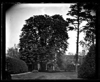 Back lawn, [Deshler-Morris House], 5442 [Germantown Avenue] showing horse-chestnut tree and pine tree [graphic].
