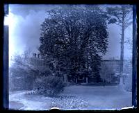 [Big horse chestnut tree, possibly Deshler-Morris House, 5442 Germantown Avenue] [graphic].