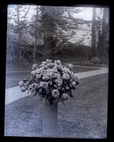 [Vase of roses in backyard of Deshler-Morris House, 5442 Germantown Avenue, Germantown] [graphic].
