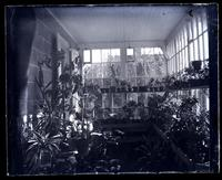 Conservatory at [Deshler-Morris House], 5442 G[erman]t[ow]n Ave. [graphic].