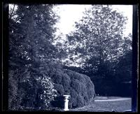 [Trees in backyard, possibly at Deshler-Morris House, 5442 Germantown Avenue] [graphic].