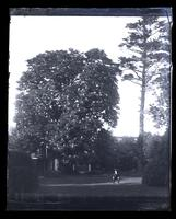 Horse chestnut & pine trees from centre of garden at home, [Deshler-Morris House, 5442 Germantown Avenue] [graphic].