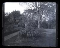 Garden from top of yard. [Deshler-Morris House, 5442 Germantown Avenue] [graphic].