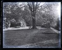 Looking up garden from centre of yard, [Deshler-Morris House 5442 Germantown Avenue] [graphic].