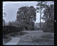 Horse-chestnut & pine trees from centre of our garden [Deshler-Morris House, 5442 Germantown Avenue] graphic].