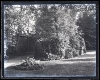 Bed near lower Walnut tree, with box bush, [Deshler-Morris House, 5442 Germantown Avenue] [graphic].