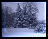 Snow scene. Hemlock trees, top of yard, from big elm of [Deshler-Morris House, 5442 Germantown Avenue] [graphic].