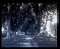 Avenue of elms & workmen's houses at Allaire, [NJ] [graphic].