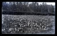 Easter lillies at General Hasting's place, [Bermuda] [graphic].