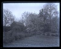 Cherry tree in our garden, in bloom, [Deshler-Morris House, 5442 Germantown Avenue] [graphic].
