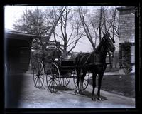 [Genesta], Fred Strawbridge in buggy, [Germantown] [graphic].