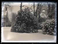 Snow scene. Box tree & part of [Deshler-Morris House, 5442 Germantown Ave, Germantown] from middle of yard [graphic].