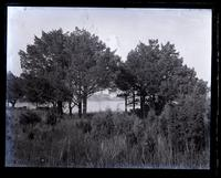 Arch of cedar trees on S. shore of Wreck Pond, showing pond & Monmouth House, [Spring Lake, NJ] [graphic].