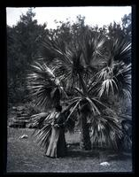 [Unidentified woman by palm tree, possibly Bermuda] [graphic].