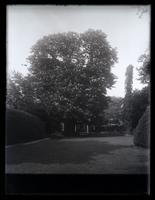 [Big horse chestnut tree in bloom, 5442 Germantown Avenue, Deshler-Morris House] [graphic].