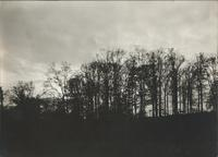 [Landscape with trees at dusk] [graphic].