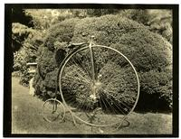 My bicycle, side view in front of box bush. (Miss Anne's)