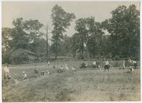 [Vegetable cultivation at demonstration center at Little Wakefield, Germantown]