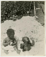 [African American toddler and baby in a pile of cotton]