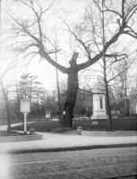Old willow, Vernon Park & a monument to commemorate Battle of Germantown.