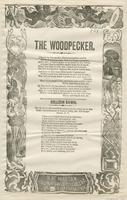 THE WOODPECKER.